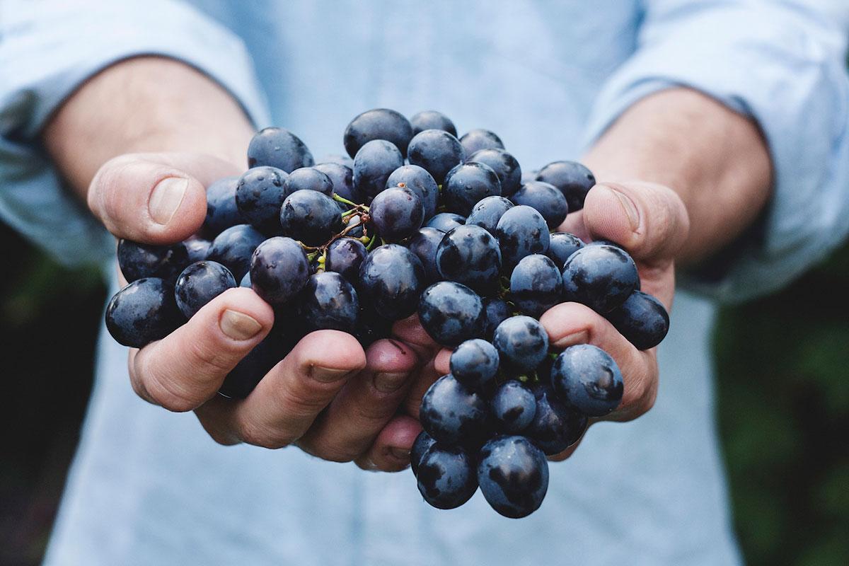 Corso di I grandi vitigni rossi italiani a Vicenza