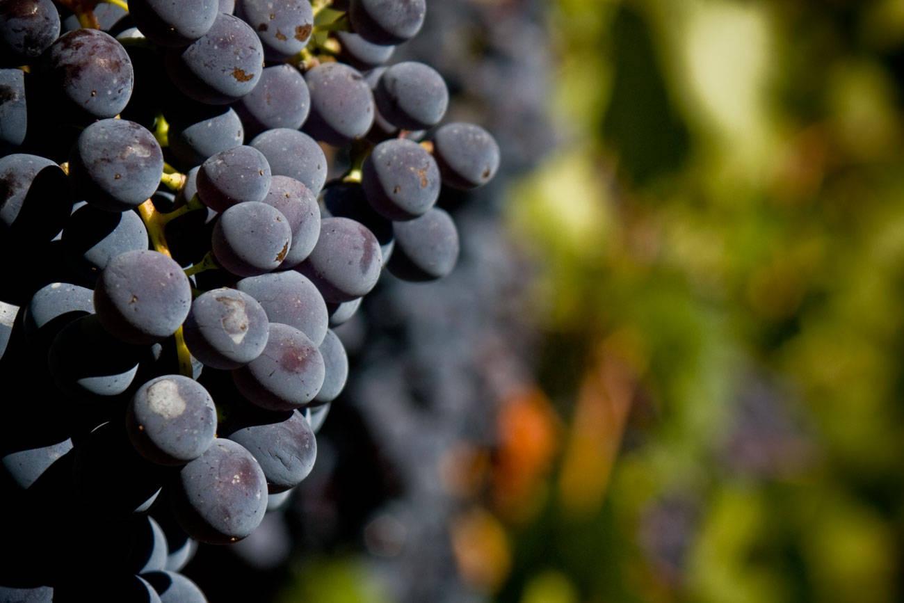 Corso online di I vini del Nord Italia