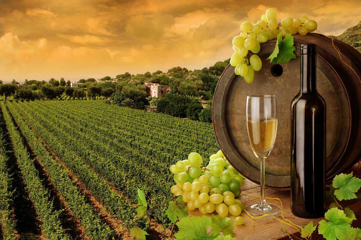 Corso di I vini del Sud Italia