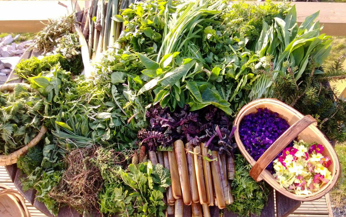 Corso di Cucina con le erbe selvatiche