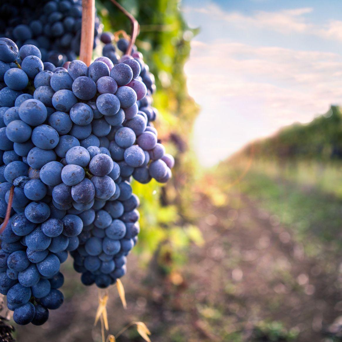 Corso i vini rossi di piemonte veneto e toscana a brescia - Corsi cucina brescia ...