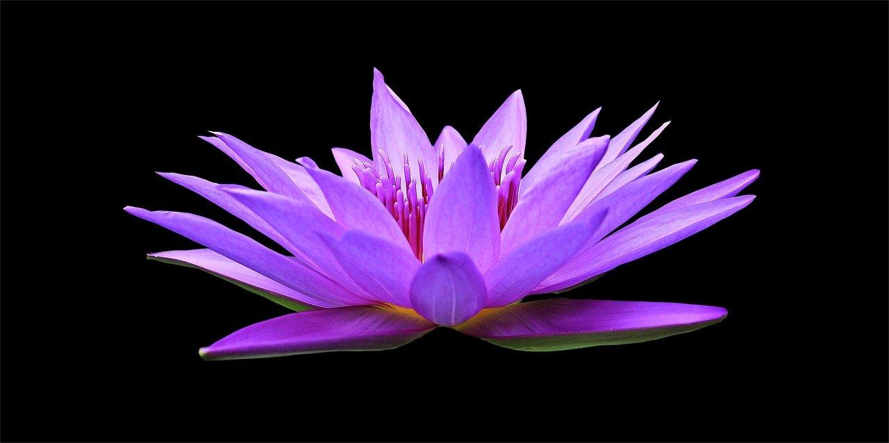 Corso online di Meditazione